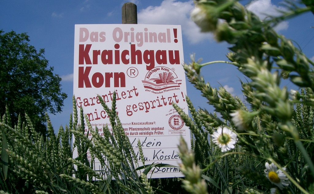 Getreide Wachstums Stand 13.Juni07 (13)